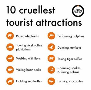 Riding elephants the most cruel tourist attraction