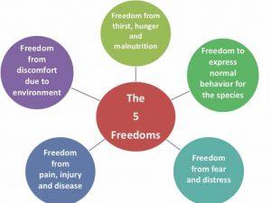 The 5 Freedoms of Animal Welfare