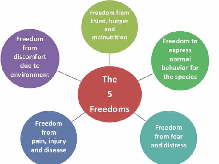 The 5 Freedoms of Animal Welfare - Mondulkiri Project