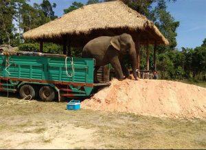 Elephant Sanctuary Siem Reap