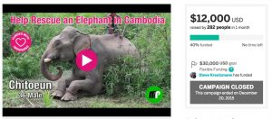 Crowdfunding Campaign to Rescue an Elephant in Cambodia