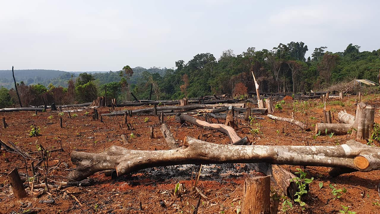 Logging in Mondulkiri