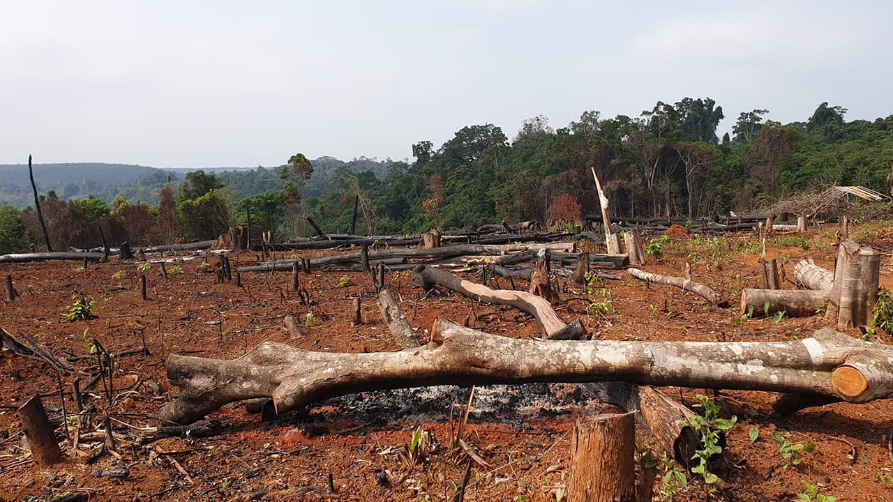 Logging in Mondulkiri