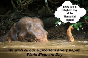 World Elephant Day 2016