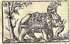 Captive Elephant or Domesticated Elephant