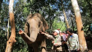A 4th elephant arrives at the sanctuary