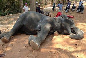 Riding elephants in Cambodia