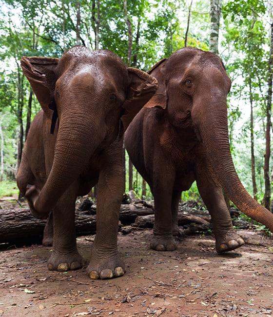 Elephant Sactuary