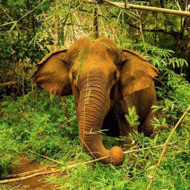 Ethical Elephant Sanctuary Cambodia