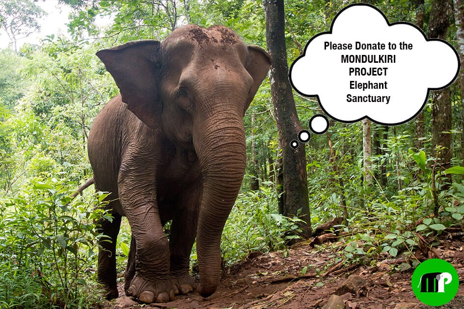 Donate to the Mondulkiri Project